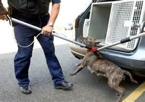 Michigan Dog Bite Laws - Personal Injury Lawyers