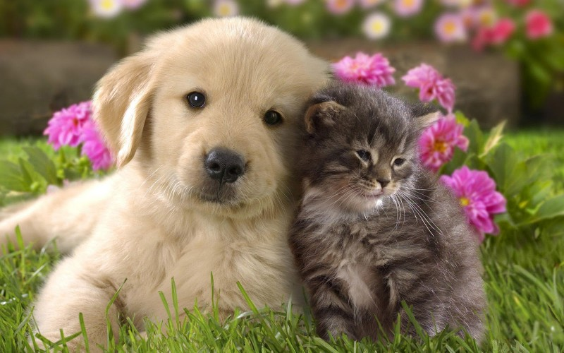 Pet Trusts Auburn Hills, Rochester, Redford, Michigan - Estate Planning - Redford Lawyers - Cute Cat & Dog