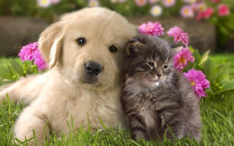 Pet Trusts Auburn Hills, Rochester, Redford, Michigan - Estate Planning - Redford Lawyers - Cute Cat & Dog